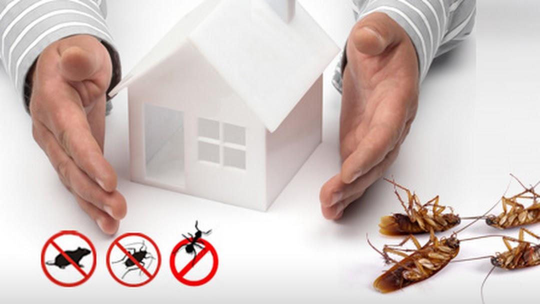 Pest Control Werribee