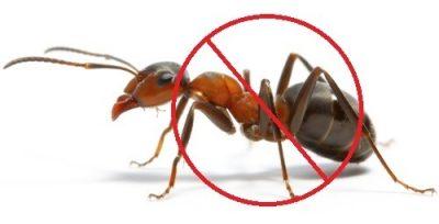 ants-pest-control-500x500.jpg