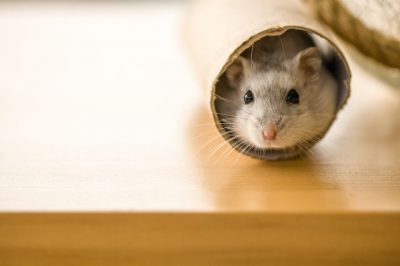 Rodent-control-grid-image-640.jpg