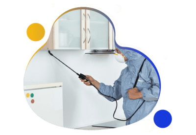 Affordable-Pest-Control-Service.png
