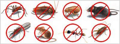 Pest-Control-Website-Design.jpg