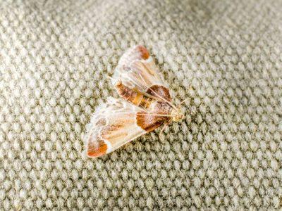 moths-732x549-thumbnail.jpg