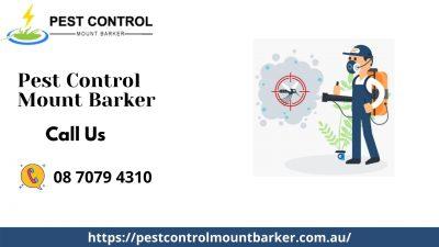 Pest Control Mount Barker.jpg