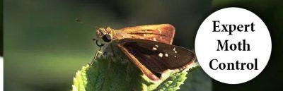Expert-Moth-Control-Service.jpg
