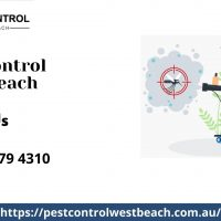 West Beach Pest Control.jpg