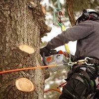 TREE-POLLARDING.jpg