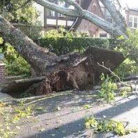 tree-14340-640_8.jpg
