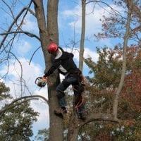 tree-1059416-1920_2_orig.jpg