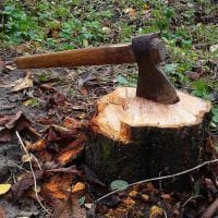 stump-grinding-and-removal.jpg
