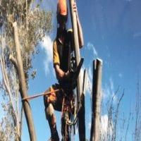 tree-trimming-process.jpg