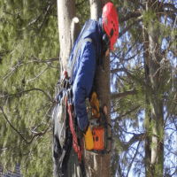 Tree Removal.png