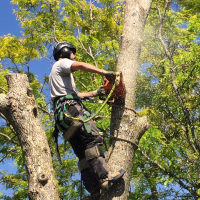 NYC tree trimming.png