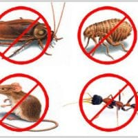 Pest-Control-Website-Design.jpg