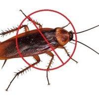cockroach-pest-control.jpg