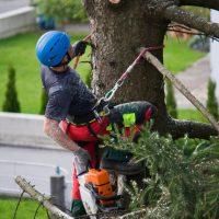 Manhattan tree removal.jpg